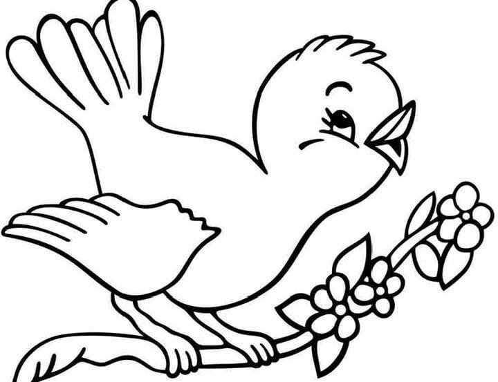 Tranh tô màu con chim non