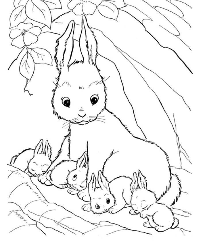 Tranh tô màu động vật - Gia đình thỏ