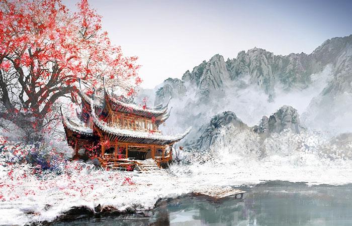 Cây tuyết sơn - loài cây biểu tượng cho sự bền bỉ, mạnh mẽ