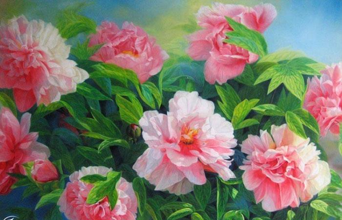 Hoa mẫu đơn là loài hoa biểu tượng của đất nước Trung Hoa