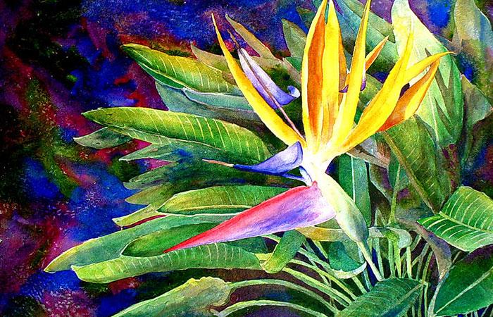 Hoa thiên điểu - loài hoa đến từ thiên đường