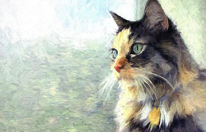 Người tuổi Thìn nên tránh treo tranh hình Mèo là đại kỵ trong tứ hành xung