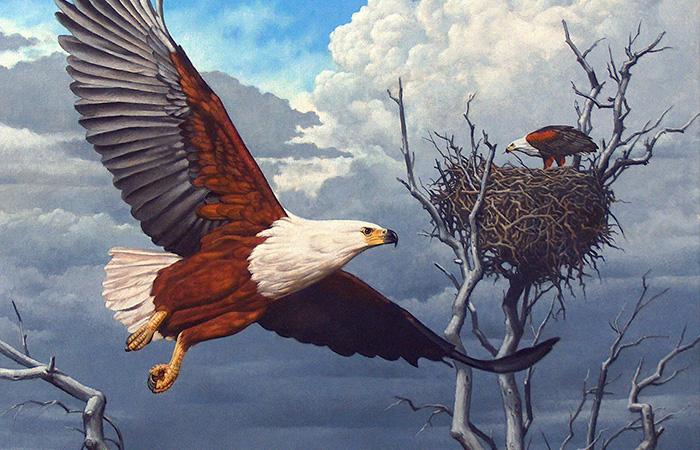Tranh đại bàng tung cánh thể hiện quyền uy của vị chúa tể trên không