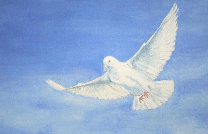 Tranh về chim bồ câu trắng sẽ thích hợp cho người tuổi Thìn mệnh Kim