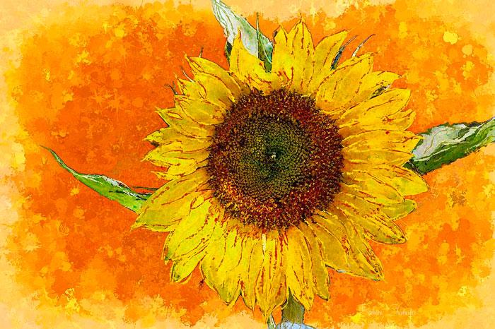 Tranh về hoa hướng dương thích hợp cho gia chủ Mậu Tý thích hoa