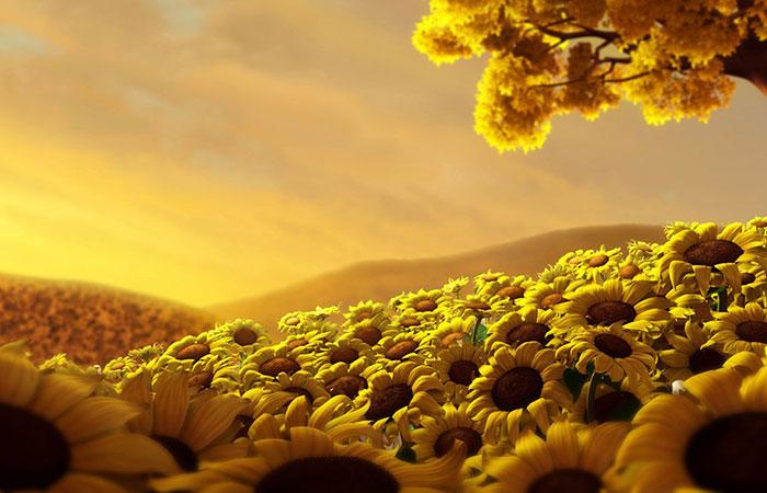 Tranh về hoa hướng duong thích hợp cho người có tương sinh, tương hợp mệnh Hỏa