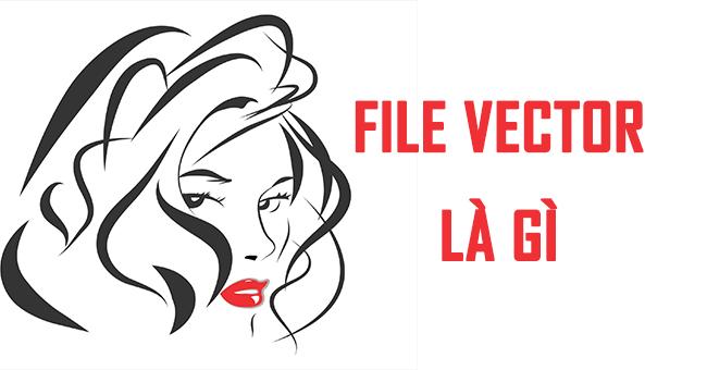 File Vector là gì? Đóng vai trò như thế nào?