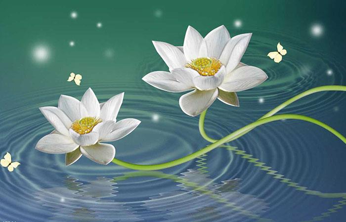 ý nghĩa tranh hoa sen trắng trong phong thủy